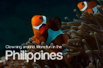 clownfish-more-fun-in-the-philippines